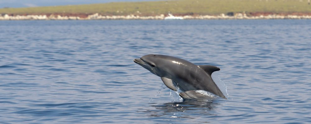 dolphins_croatia